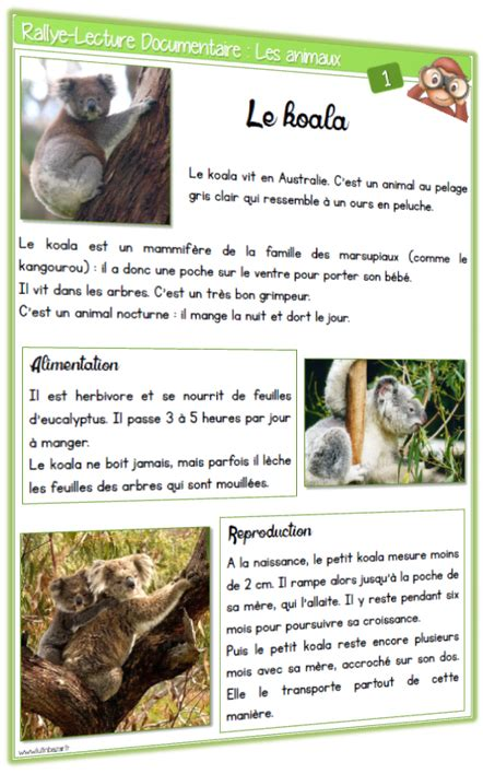 Rallye Lecture Documentaire : les animaux | Rallye lecture