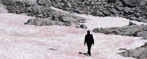 Mysterious Emergence of Pink Ice in The Alps Could Have